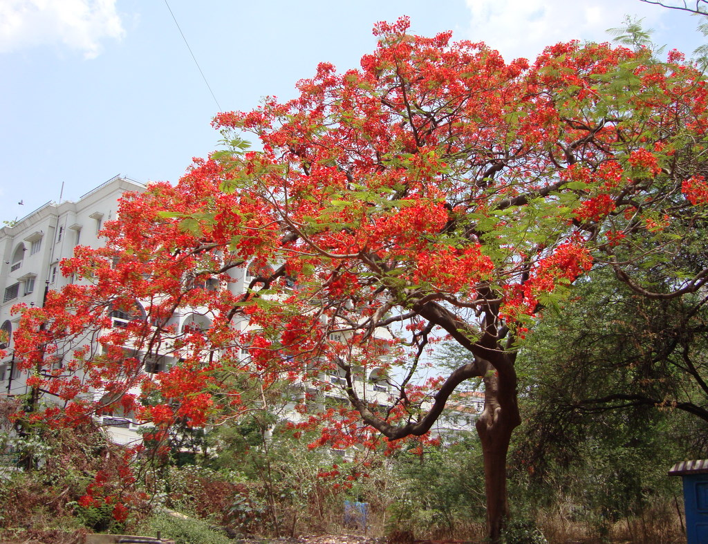 Tree naturally beautiful for Tree with red flowers