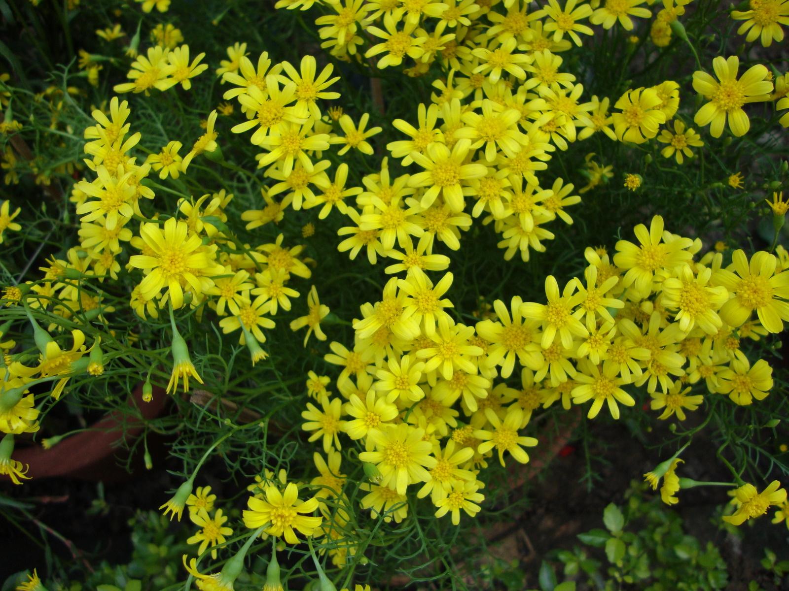 yellow | Naturally Beautiful...